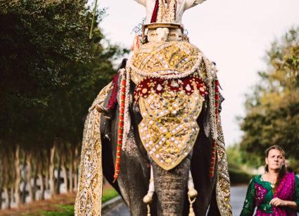 Wedding barat arrangement in rajasthan
